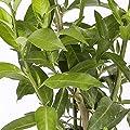 Setos y arbustos