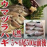 山形県産 ウマヅラハギ 500g5~6尾 生冷凍 鮮魚セット カワハギ ウマズラハギ