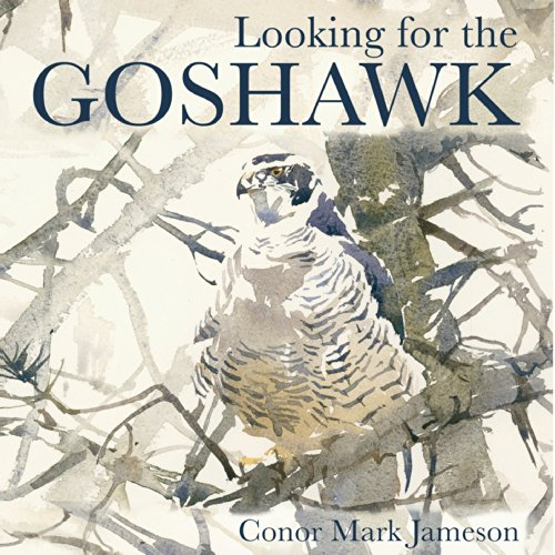 Looking for the Goshawk audiobook cover art