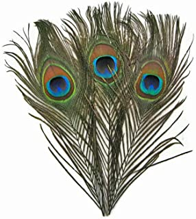 Moonlight Feather | 10 Pieces - Big Eye Natural Peacock Tail Eye Feathers for Crafts, Costume, Mask, Halloween Green Iridescent Purple Natural Molted Peacock Feathers.