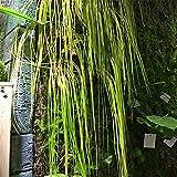 UOEIDOSB 10 Uds 55cm césped Artificial Colgante Dejar Plantas de simulación decoración de Hojas Flor de plástico Accesorios de Pared Verde césped Decorativo