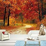 Tapeten Wandbilder,Red Maple Waldweg Foto Anpassen Von