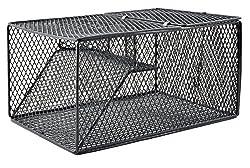 cheap South Bend SBCD-2369 Rabbit Wire Trap