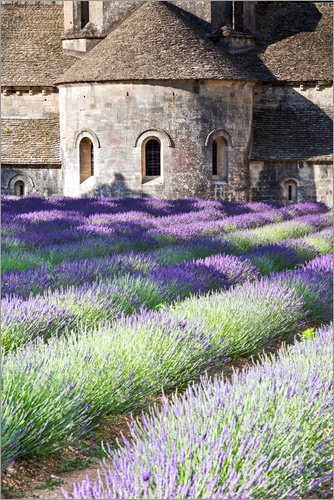 Posterlounge Acrylglasbild 60 x 90 cm: Senanque Abtei und Lavendel, Provence von Matteo Colombo - Wandbild, Acryl Glasbild, Druck auf Acryl Glas Bild