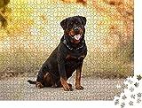 ganjue Puzzle 1000 Piezas Piezas Puzzle Rompecabezas Hermoso Perro de Raza Rottweiler para pasear en la Familia del Arte otoñal Adultos Juegos Infantiles educativos Juegos de
