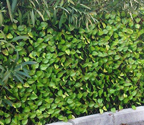 PEGANE Brise-Vue Treillis en Feuilles de Rosier Coloris Vert Tendre - Dim : 1,00m x 2m
