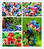 Big Sale!100 Pcs/Lot Colorful Pink Blueberry Tree Seed Fruit Blueberry Seed Potted Bonsai Tree Seeds,#NPT2J8