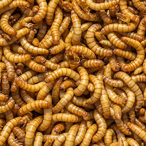 DBDPet Organically Grown Bulk Premium 1,500ct Live Mealworms - Great Food for Leopard Geckos, Chameleons, Geckos, Wild and Pet Birds, Blue Birds, Chickens - Includes Caresheet
