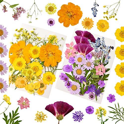 YMHPRIDE 80 piezas de flores secas naturales prensadas, varios pétalos de hojas de flores secas para bricolaje, velas, joyas, uñas, manualidades, decoración floral
