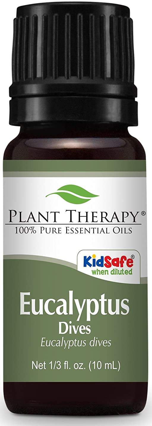 急行する薬局咳Plant Therapy Eucalyptus Dives (Peppermint) Essential Oil 10 mL (1/3 oz) 100% Pure, Undiluted, Therapeutic Grade