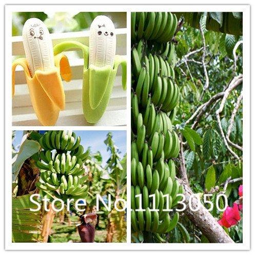 Vente! 100pcs 10 types Bonsai Banana Seeds 100% d'origine Graines bio Blooming fruits Jardin des plantes