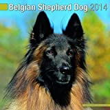 Belgian Shepherd Dog 2014 Wall Calendar