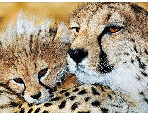 FNBN DIY 5D Kits de Pintura de Diamantes DIY Cheetah Animal Pictures Dormitorio decoración de la Pared del hogar
