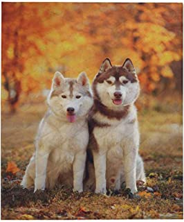InterestPrint Beautiful Red Siberian Husky Comforter Set Thin Quilt Lightweight Comforter 50