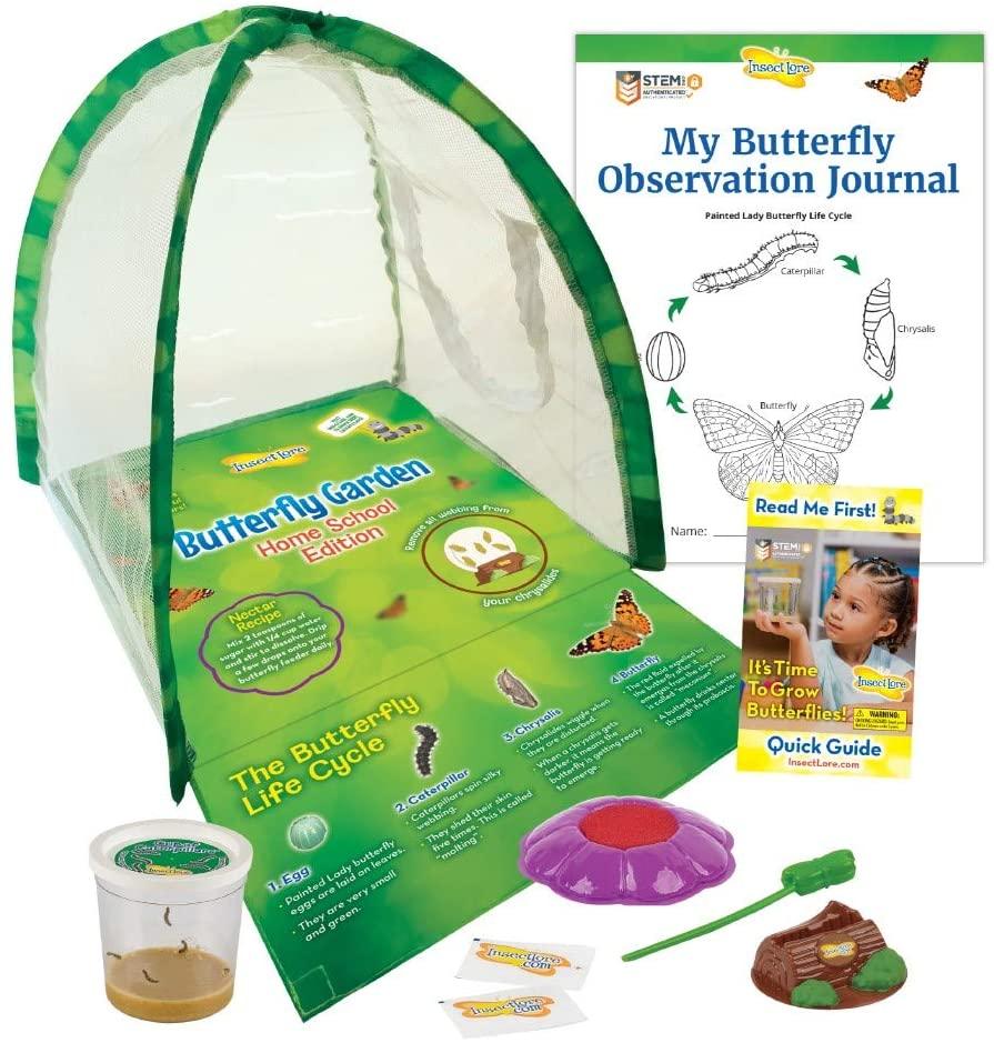 Insect Lore Butterfly mart Garden Home Live with Cater Atlanta Mall Edition School