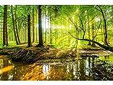 Oedim Fotomural Vinilo Bosque Primavera | Fotomurales | Fotomural Pared | Fotomural Decorativo | Vinilo Decorativo | 100x70cm | para la decoración de comedores, Salones |