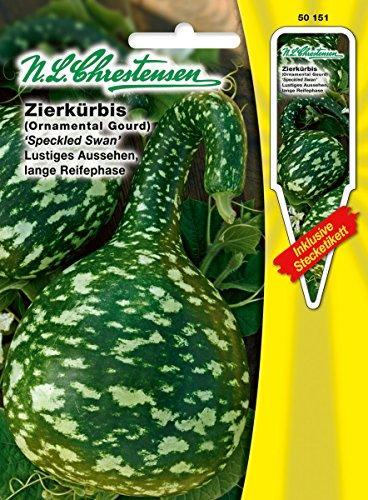 Zierkürbis 'Speckled Swan' lustiges Aussehen, lange Reifephase ( mit Stecketikett) 'Cucurbita pepo' Kürbis