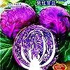 2018ホットレアホーロームパープルキャベツアブラナオレラセアハイブリッド野菜、400種、オリジナルパック、サラダ野菜ONX107Y