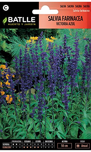 Semillas de Flores - Salvia farinácea Victoria azul - Batlle