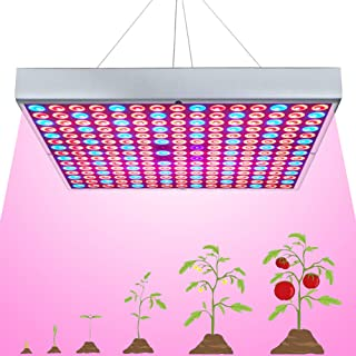 grow lights for indoor trees