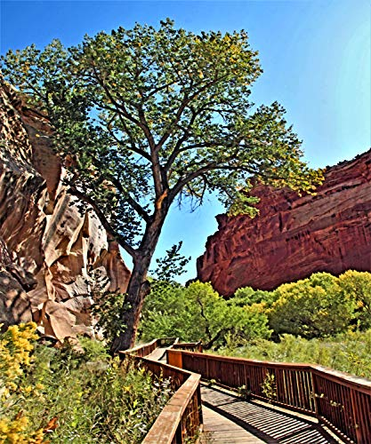 Slide Show - Tucson, Pearl of Sonora - Volume 128 - Cathedral Valley -Capitol Reef NP, UT