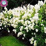 5pcs china vaniglia fragola semi di albero ortensia fiore per piantare a casa vaso da giardino perenne all'aperto bonsai ecc facile da coltivare 10
