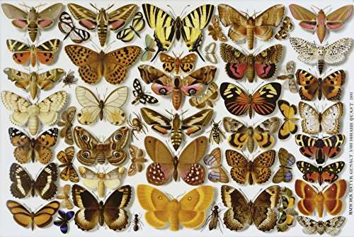 Artland Alte Meister selbstklebendes Wandbild Johann Zacharias Quast Schmetterlinge Porzellanmalerei Wandtattoo Art 20 x 30 cm Kunstdruck Gemälde Realismus R0JS