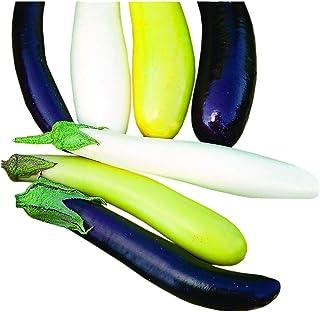 Park Seed Gourmet Fingerling Blend Eggplant Seeds, 25 Seeds per Pack