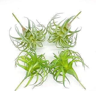 ZKTECH 4 Pack Artificial Air Plants Faux Flocking Tillandsia Air Plants Bromeliads for Home Decor Terrarium Decoration Art...