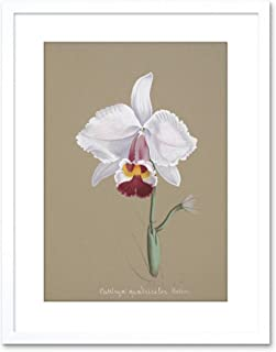 Painting Book Page Orchid Collection Cattleya Quadricolor Framed Wall Art Print
