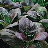 Park Seed Purple Hybrid Pak Choi Seed Tape