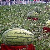 TENGGO Egrow 30Pcs Semillas de Gigante Sandía Negra Tyrant Rey Semillas de Sandía Fruta de Jardín