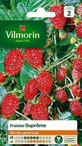 fraisier leclerc