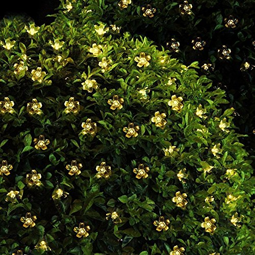 Solar Blumen 40er