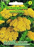 Schafgarbe Bronzegelb'Achillea filipendulina' Trockenblume langlebige Staude