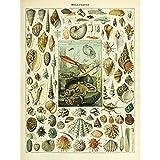 Meishe Art Poster Kunstdrucke Plakatdruck Muschel Conch