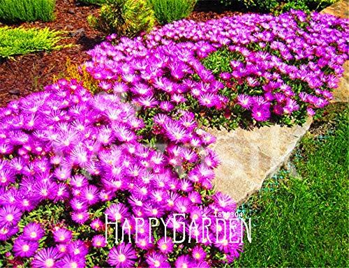 AGROBITS 100 pcs Un sac Best-vente! Delosperma Cooperi Table Tasty culture facile bricolage jardin bonsaï légumes