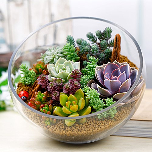 Idealhere 多肉植物種 150粒セット 新品種  ガーデニング
