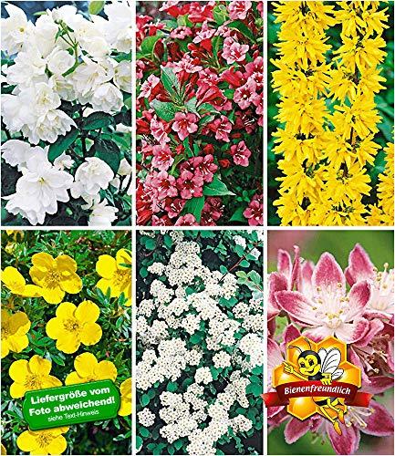 BALDUR Garten 5 Meter Blüh-Hecken-Kollektion, Blütenhecke 6 Pflanzen Forsythie, Weigelie, Jasmin, Deutzie, Potentilla, Spirea