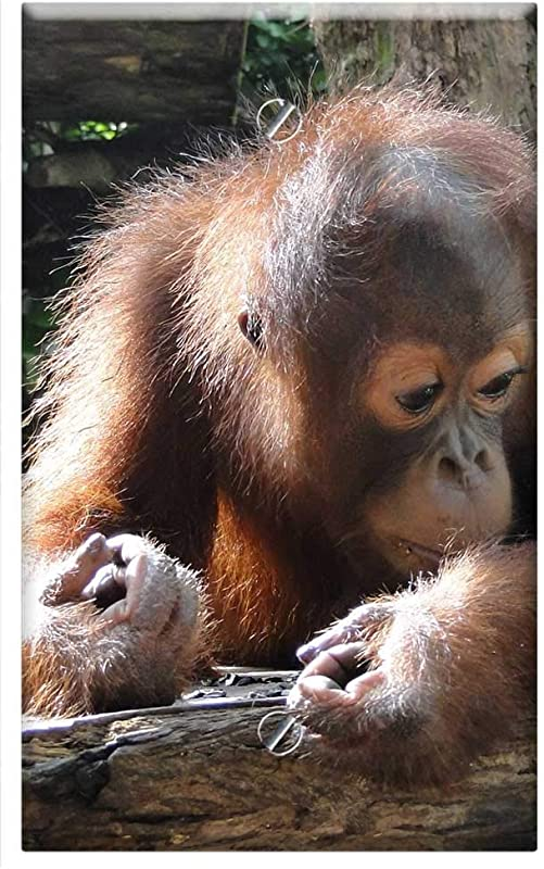 Single Gang Blank Wall Plate Cover Animal Baby Orangutan Cute Sweet Mammal Nature