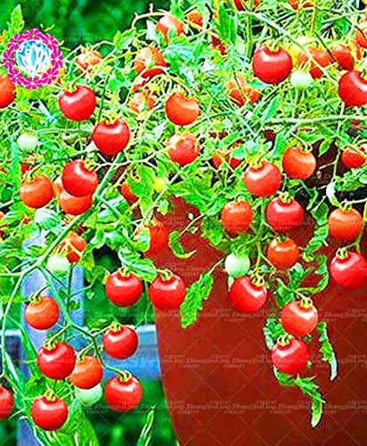 200 graines de tomate grecque graines bonsaï jardinage Sweet Seeds Plantes Graines de légumes non Ogm pour jardin Plantation