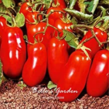 Garden in Home Sans Frontieres 100pcs Heriloom Variety 'San Marzano Lungo' Tomato Seeds Annual Seeds Home Bonsai Fruit Vegetable Seeds