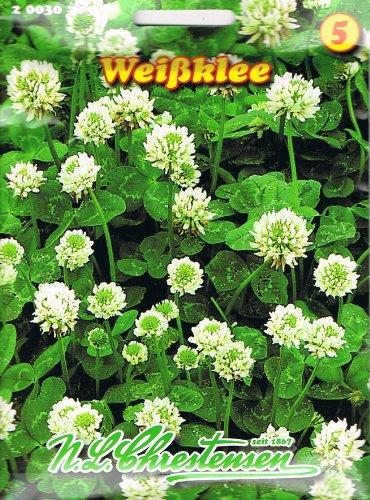Chrestensen Weißklee , mehrjährig, eiweißreiche Futterpflanze, halb- und ganzjährigen Gründüngung, Klee Gründünger