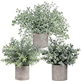 Winlyn Mini Potted Plants...