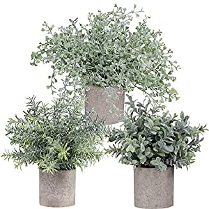 Winlyn Mini Potted Plants Artificial Flocked Eucalyptus Boxwood Rosemary Greenery in Pots Faux Potted Herbs Small Houseplants 8.8″-10″ Tall for Indoor Greenery Tabletop Décor Centerpiece 3 Pack