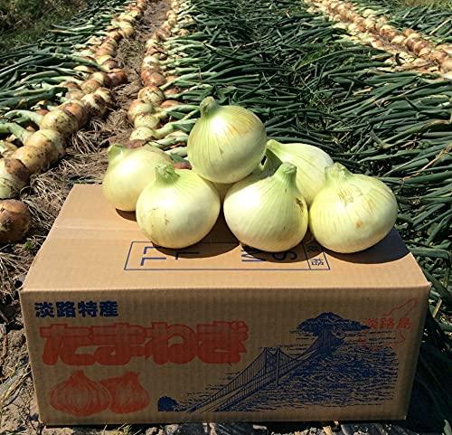 カツラギ農園 淡路島 新玉ねぎ たまねぎ タマネギ3kg L~Mサイズ混合 合計約3kg
