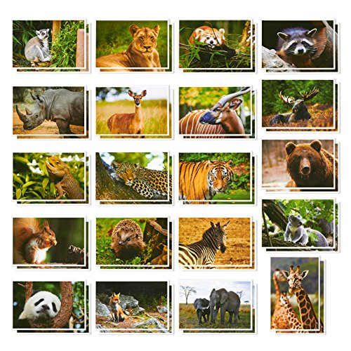 Wild Animal Postcards � 40 Postcards � Bulk Set - Featuring Tigers, Bears, Giraffes, Elephants, & More � 4 x 6 Inches