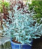 mehr Informationen und Artikel bestellen BALDUR Garten Winte - www.mettenmors.de, Tipps für Gartenfreunde