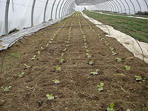 GETSO Samen-Paket Nicht Pflanzen: 3G (~ Seeds): 1000/6000 SeedsRomaine Rougette Montpelliers Midi
