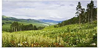 GREATBIGCANVAS Poster Print Entitled Aspen Trees and Wildflowers on Hillside, Crested Butte, Gunnison County, Colorado by 60